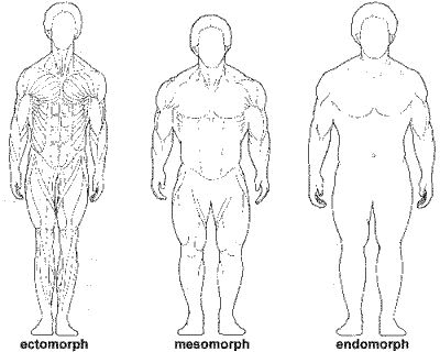 Women+body+types+ectomorph+mesomorph+endomorph